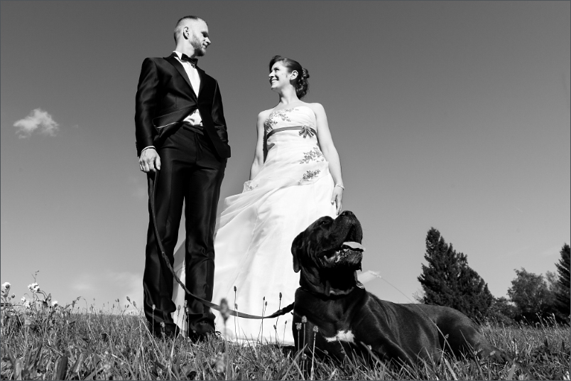 Brautpaar Fotoshootin mit Hund beim Paffenberg in der Nähe von Zell im Wiesental
