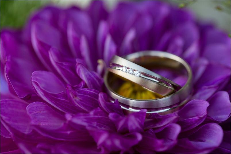 Ringe auf einer Chrysantheme