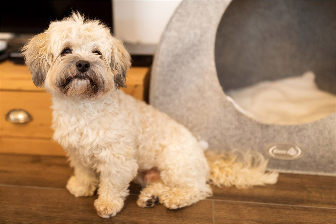 Homestory - Hunde Fotoshooting - Fotograf Rheinfelden